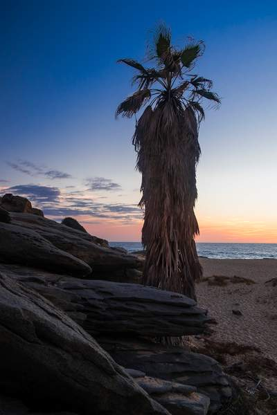 Rocks and Palm in Baja