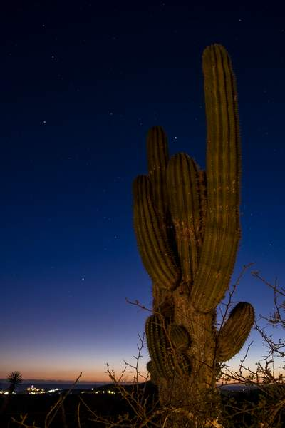 Saguarro Twilight