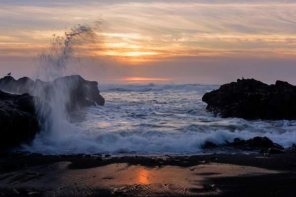 Seagulls Watching the Yachats Sunset
