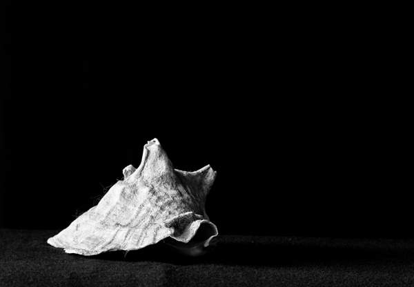 Shell Black and White