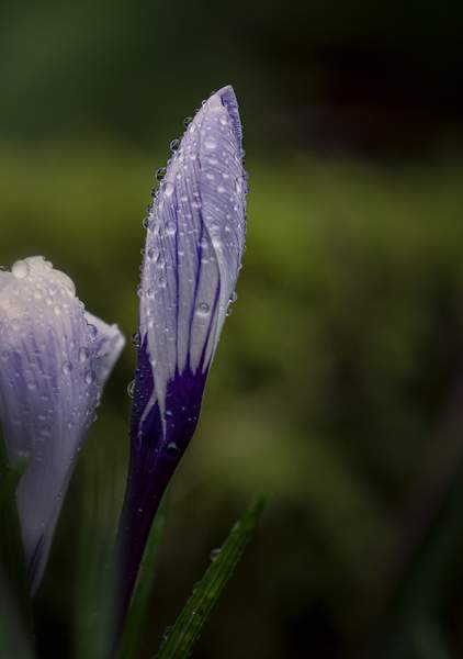 Signs Of Spring Amidst the Constant Rain