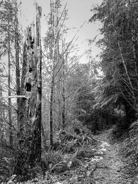 Snag On the Trail