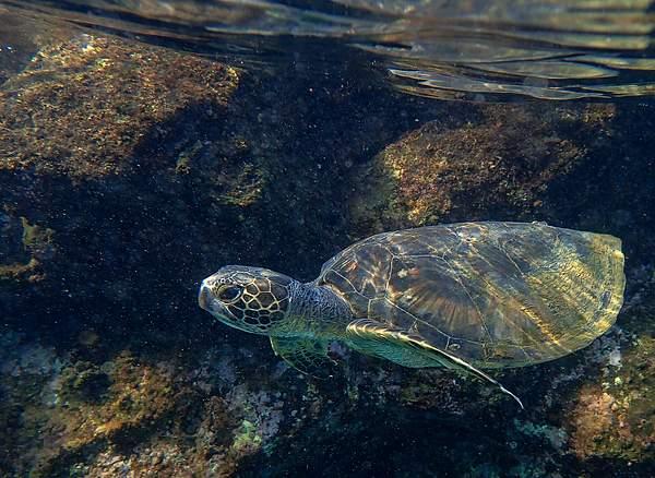 Close Turtle Encoounter 1
