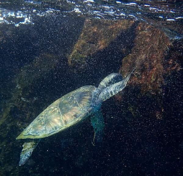 Close Turtle Encounter 3
