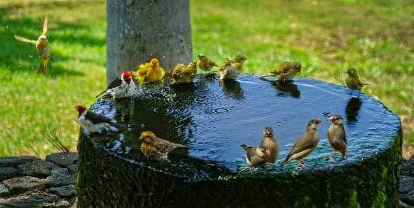 Full Circle At the Bird Bath