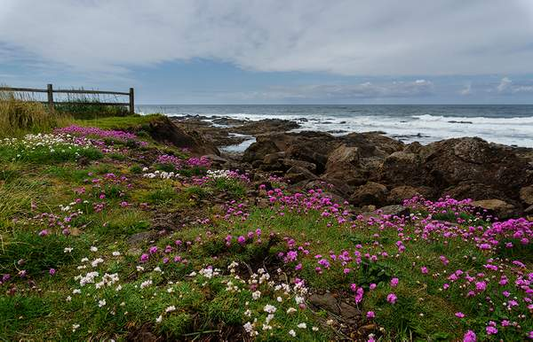Flowers_Leading_to_the_Sea