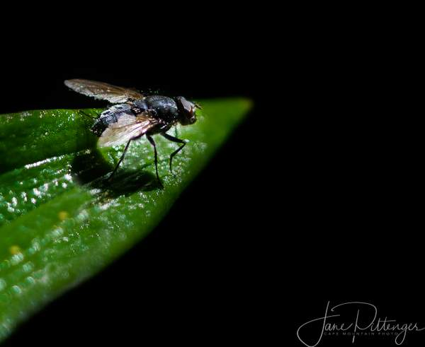 Fly Readying for Take Off