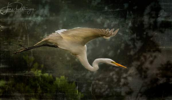 Flying_White_Egret_with_Textures