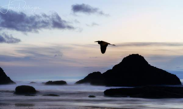 Seal_Rock_Quietness_After_the_Sun_Goes_Down_with_Heron