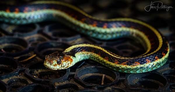 Snake In the Garage