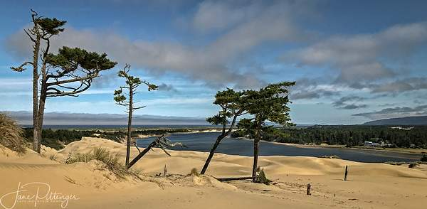 View_West_Over_the_Dunes_from_New_Hike