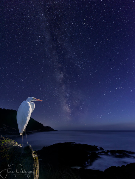 White Egret Watching the Milky Way by jgpittenger