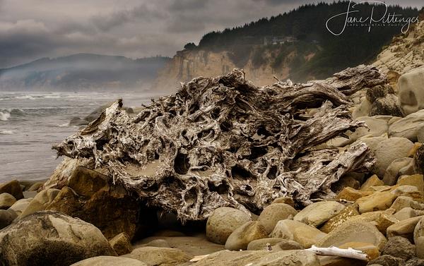 Driftwood on Whiskey Run Beach copy by jgpittenger