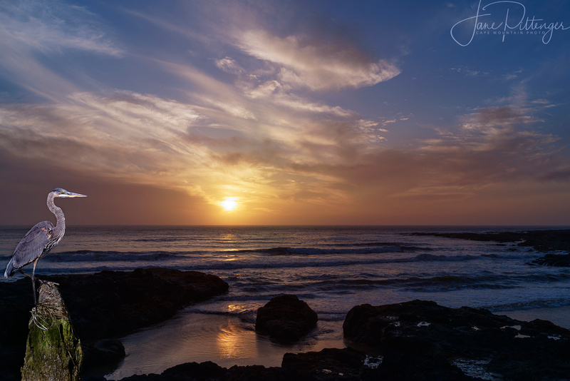 Heron_Watching_the_Sun_Go_Down_At_Neptune