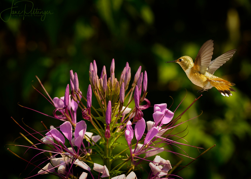 Hummer and Elkton Flowers