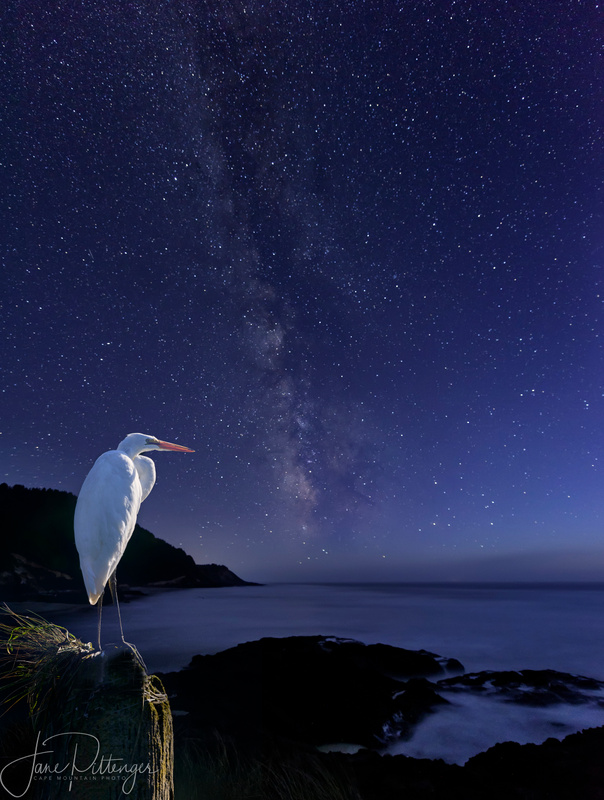 White Egret Watching the Milky Way brightened