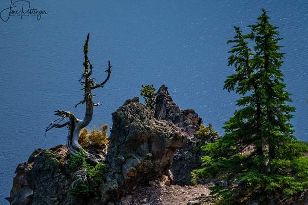 At the Edge of Crater Lake