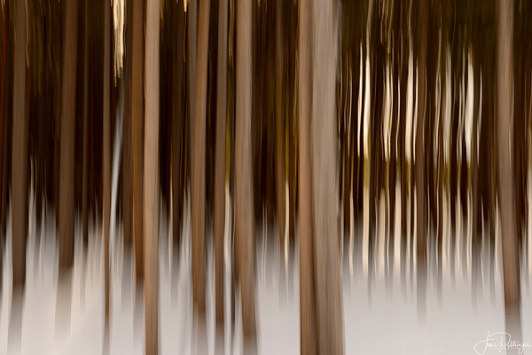 ICM_In_the_Snow by jgpittenger