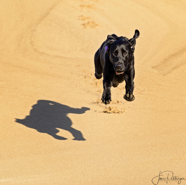 Pearl_Leaping_On_the_Dunes_ by jgpittenger
