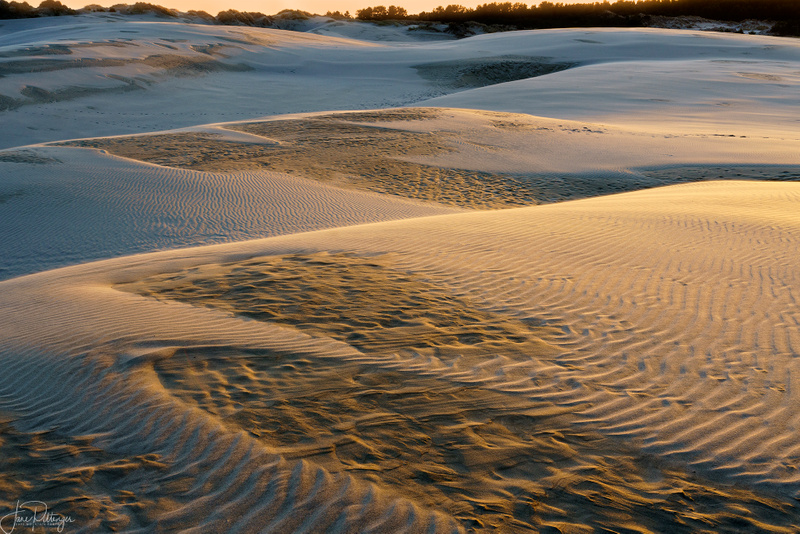 Golden Hour On the Dunes