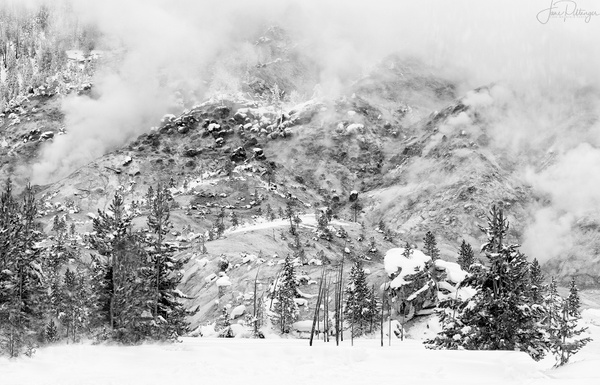 WInter Scene in Yellowstone B and W No Sign by jgpittenger