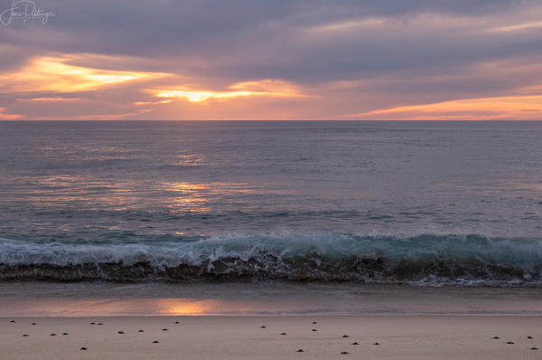 Heading_Into_the_Sea_At_Sunset_ by jgpittenger