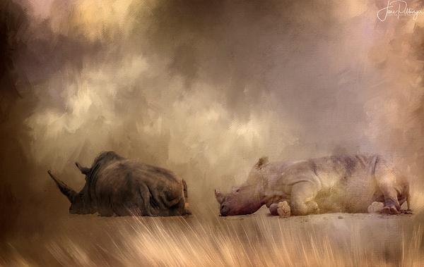 Long_Rhinoscerous_Nap by jgpittenger