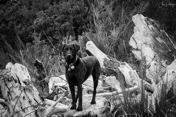 My_Girl_Like_To_Climb_ by jgpittenger