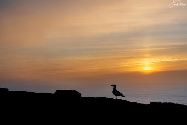 Seagull_Taking_in_the_Sunset by jgpittenger
