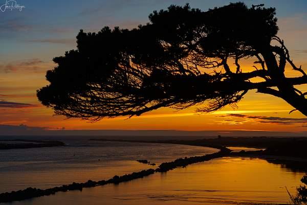 Tree Frames the Sunset at Harbor Vista