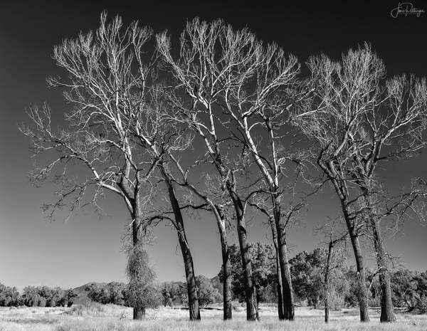 Dance Of the Dead Trees 2