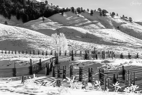 Fences and Hoar Frost At Yellowstone B and W