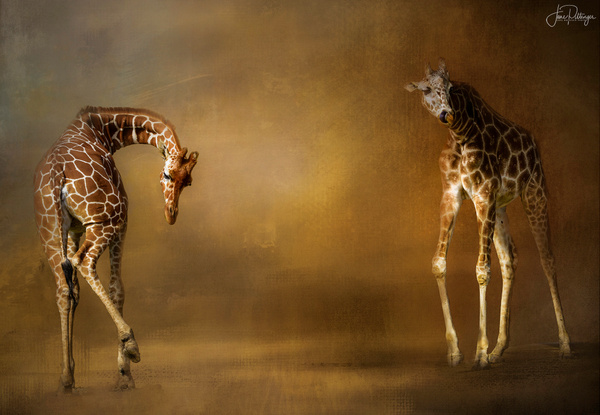 Giraffes for Textures