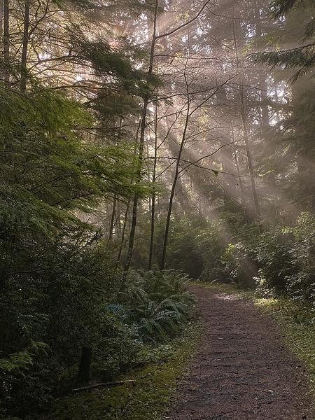 Sun Rays On Cummins Creek Trail