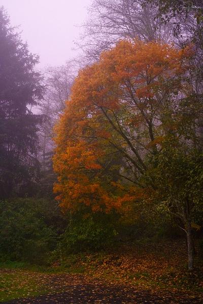 Purple Dawn Fog