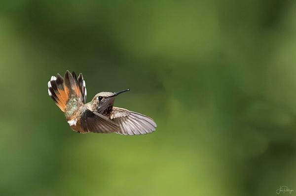 Fly In (