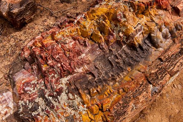 Capital Reef NP 2013-4747 by Robert Duncan