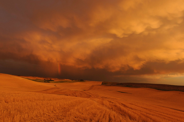 Palouse Area 2013-6083 by Robert Duncan
