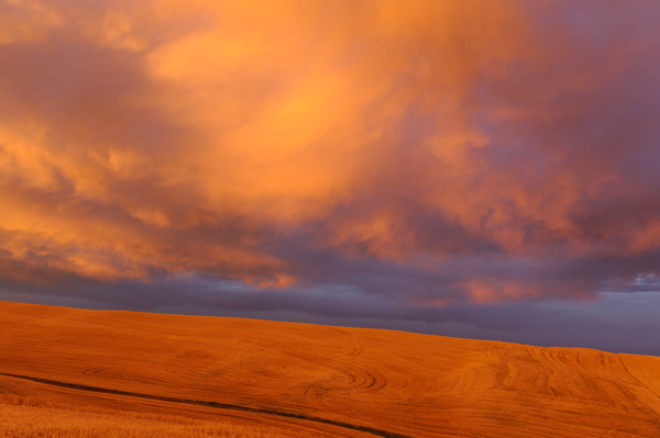 Palouse Area 2013-6088 by Robert Duncan