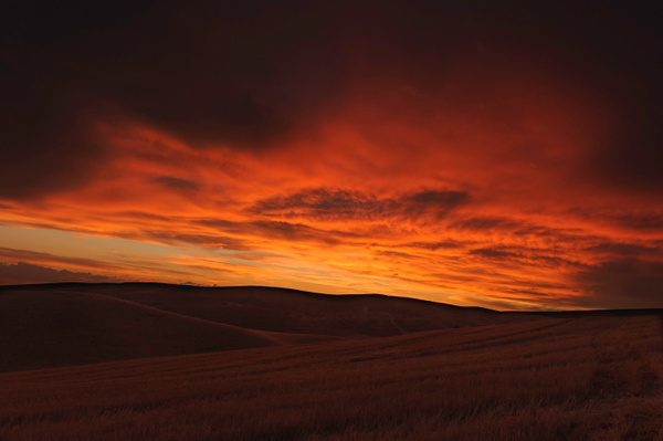 Palouse Area 2013-6106 by Robert Duncan