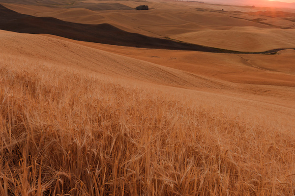 Palouse Area 2013-6170 by Robert Duncan