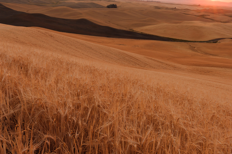 Palouse Area 2013-6170