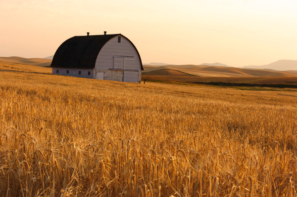 Palouse Area 2013-5986 by Robert Duncan