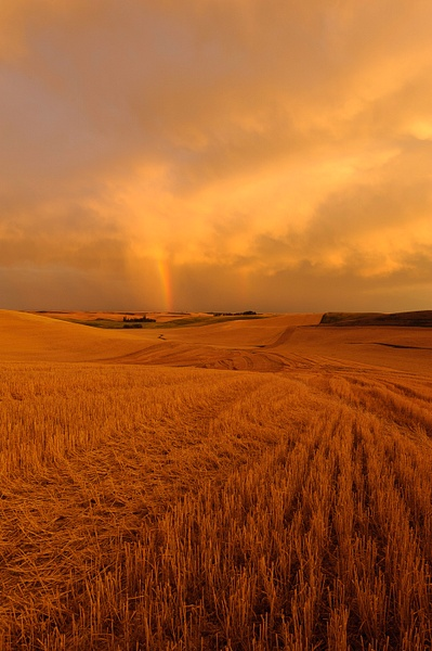 Palouse Area 2013-6081 by Robert Duncan