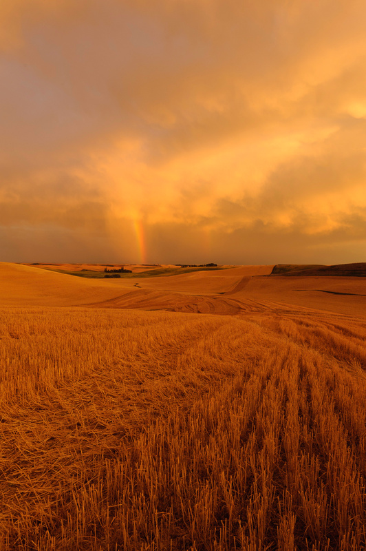 Palouse Area 2013-6081