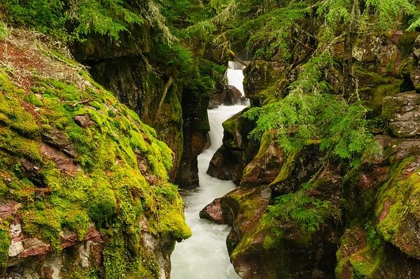 _LAN6436 Avalanche Creek by Robert Duncan