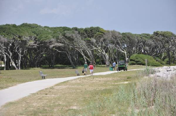 Windswept Trees @ Ft Fisher