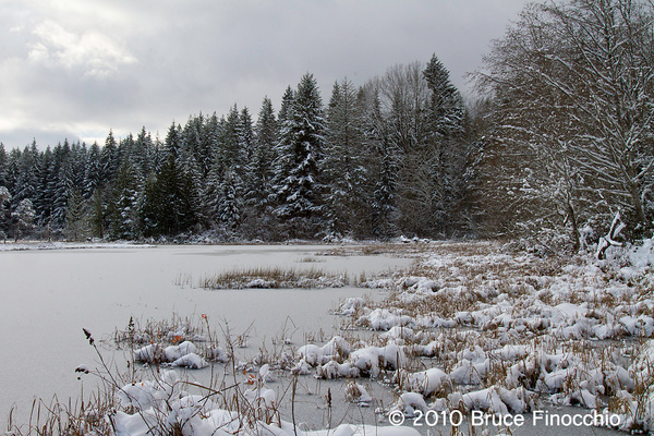 Pond Edge With Snow and Light by BruceFinocchio