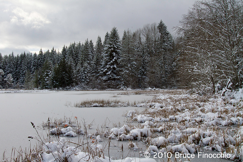 Pond Edge With Snow and Light