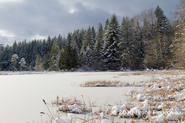 Pond Scenic by BruceFinocchio